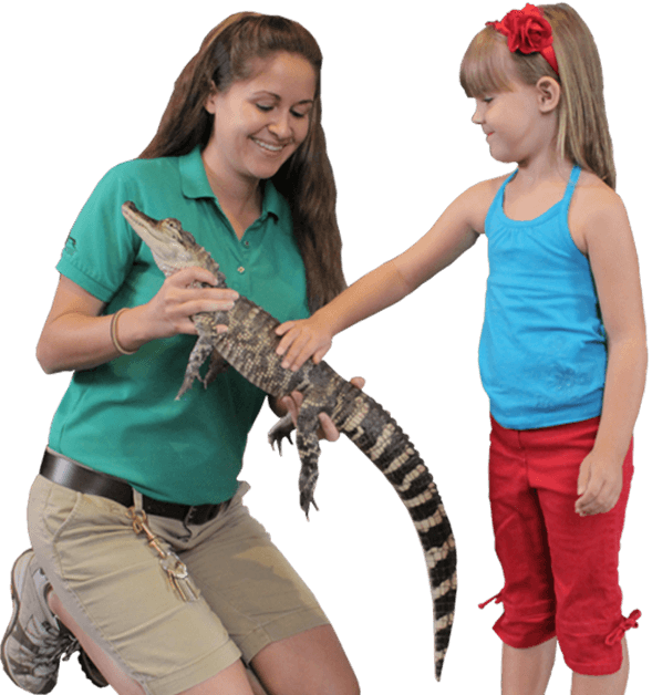 education petting alligator