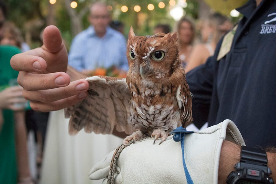 Owl You'd Want to Know About the Owls | Brevard Zoo Blog