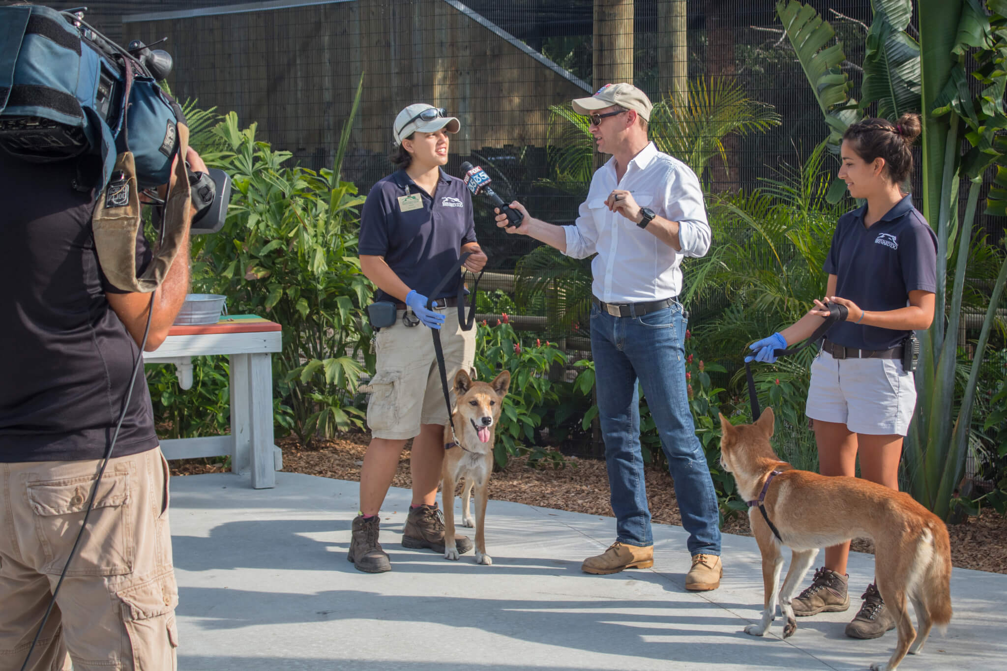 Media interviewing dingo keepers