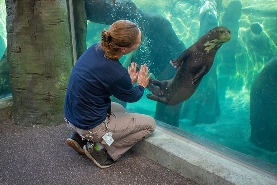 woman looking at giant otter