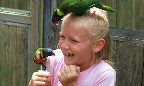 parakeets on girl