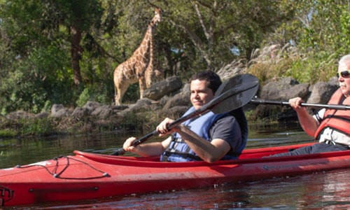 kayaking around giraffe