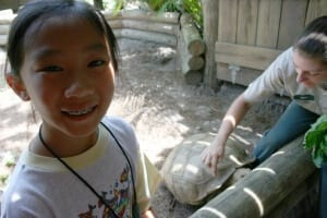 African Spurred Tortoise in petting zone