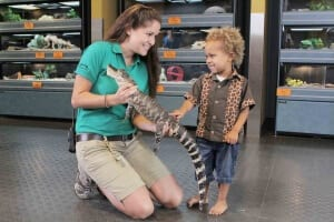 Animal specialist introduced juvenile american alligator to child