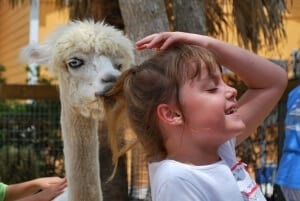 Alpaca with child
