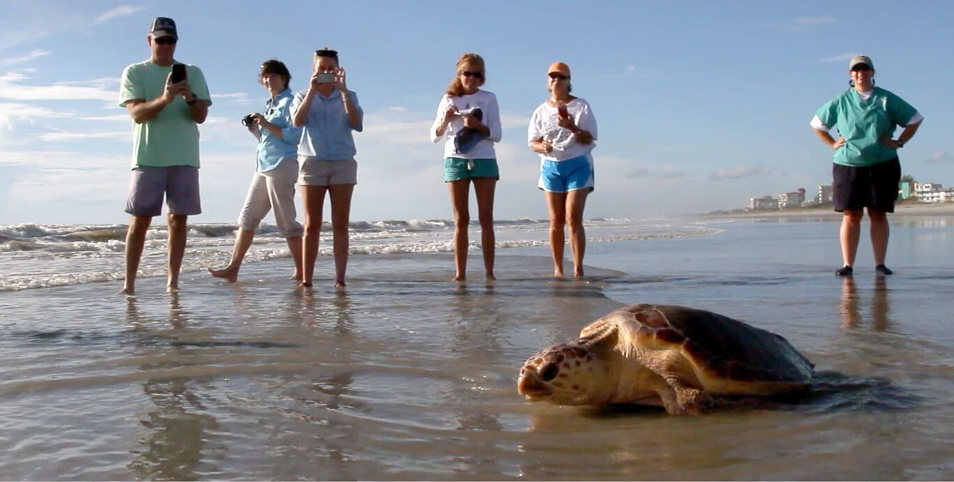 Group releasing loggerhead sea turtle