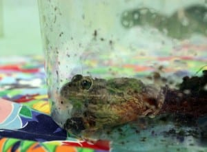 Frog in container