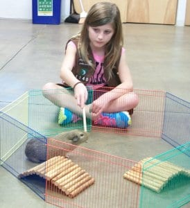 Girl scout playing with an education animal