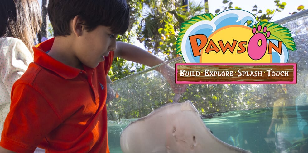 Boy feeds a stingray