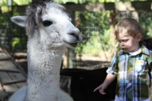 Paws on Petting Zoo alpaca face