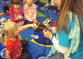 Zooper Kids meeting a kookaburra bird