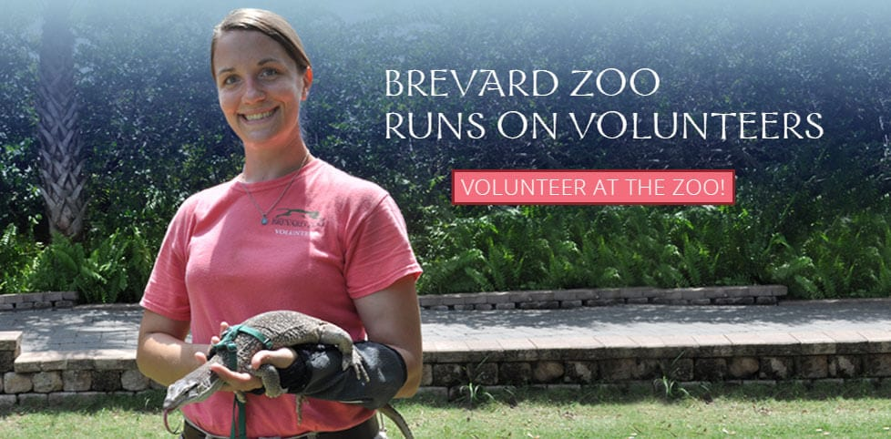 Volunteer at Brevard Zoo