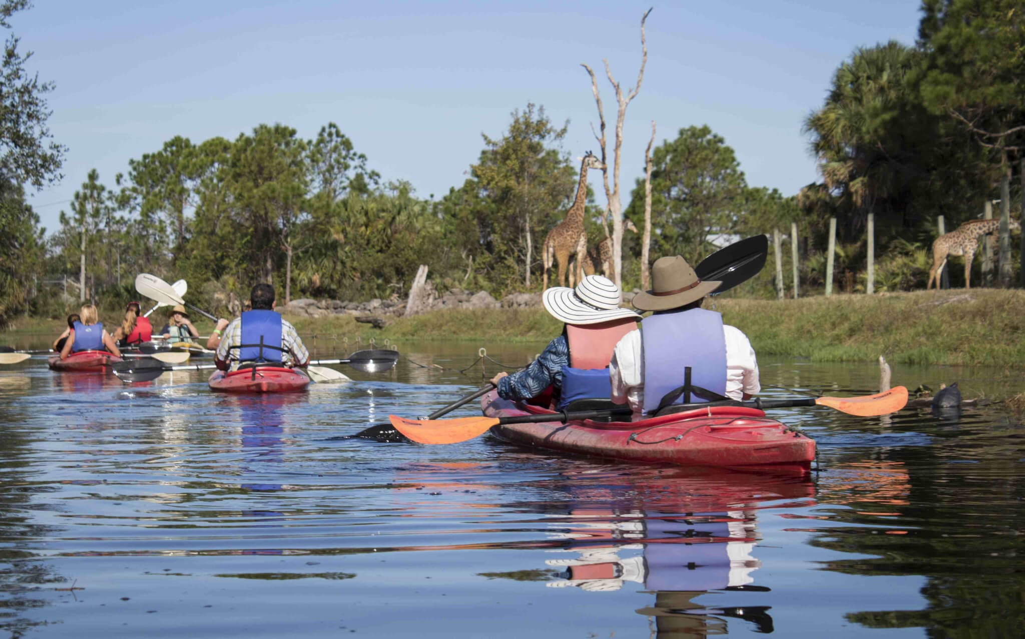 Three kayaks along giraffe habitat