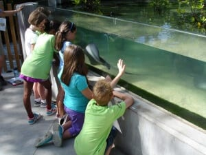 Children observe Atlantic stingray in Paws On
