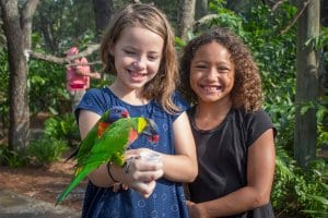 Guests feeding rainbow lorikeet