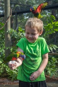 Boy feeds lorikeet