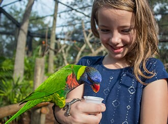 Young girl feeding a lorikeet