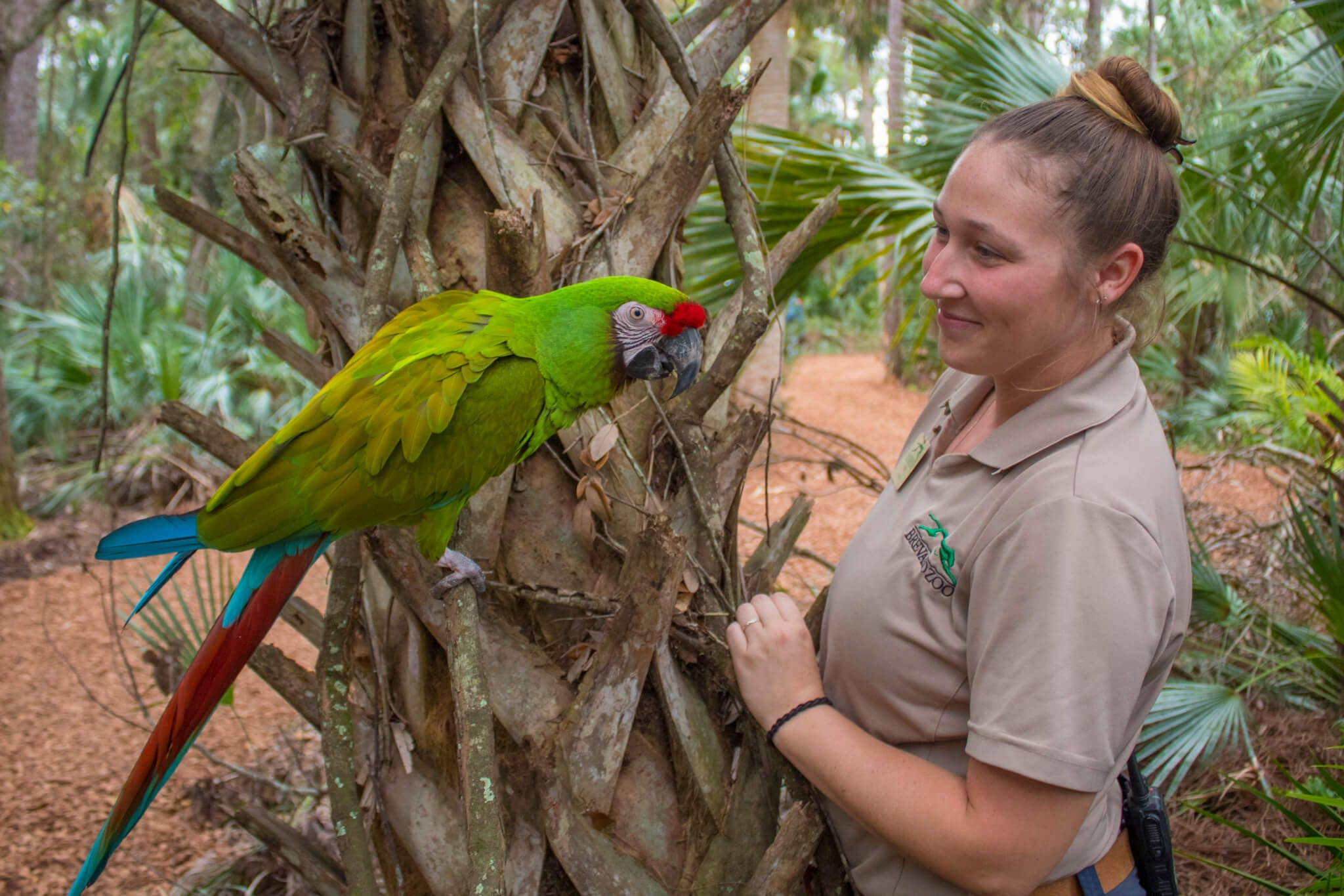 Zookeeper with macaw
