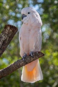 Cockatoo perched on tree