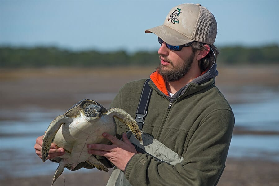 An FWC biologist examines a cold-stunned sea turtle