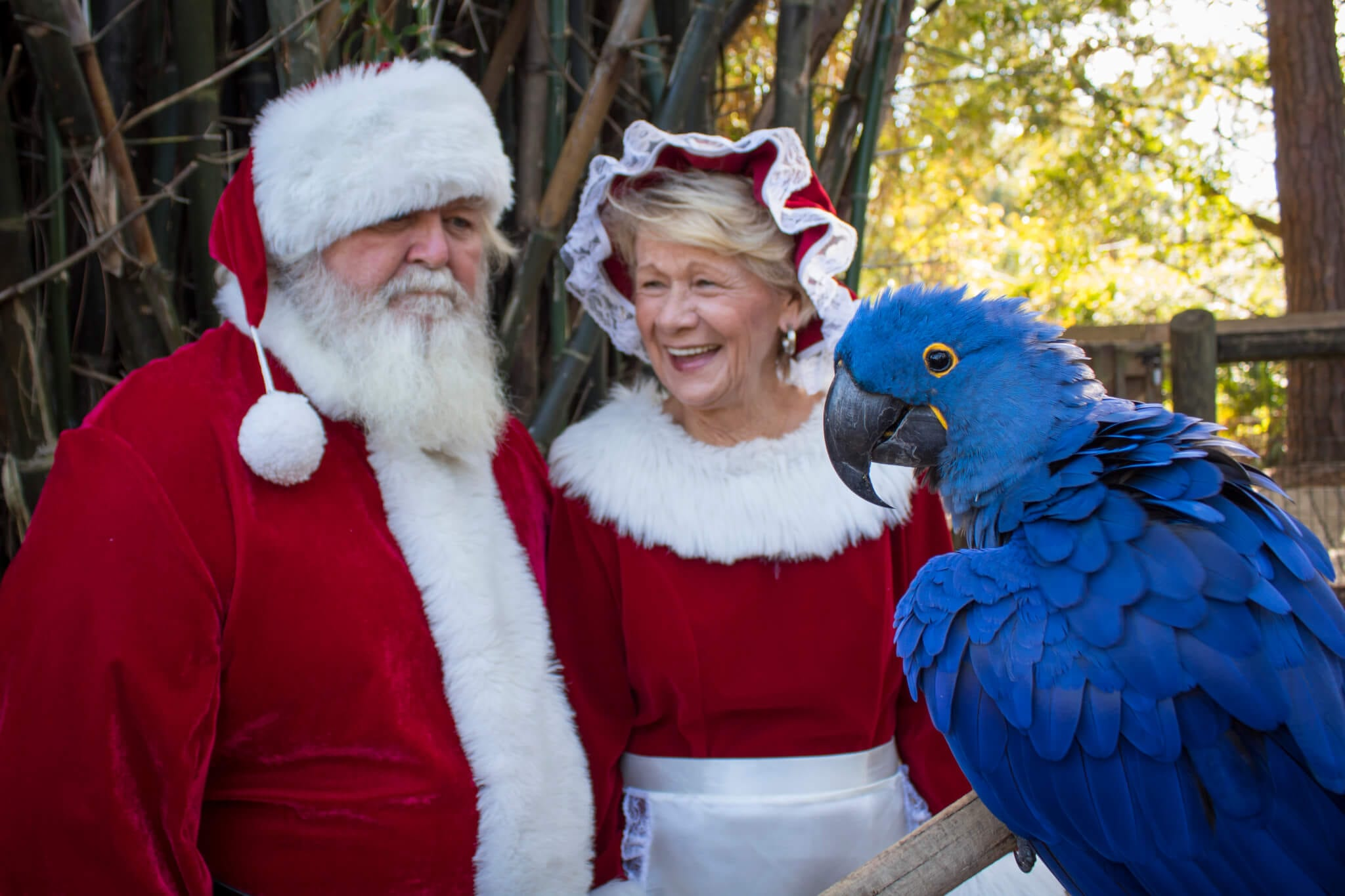 Santa and Mrs. Claus with macaw