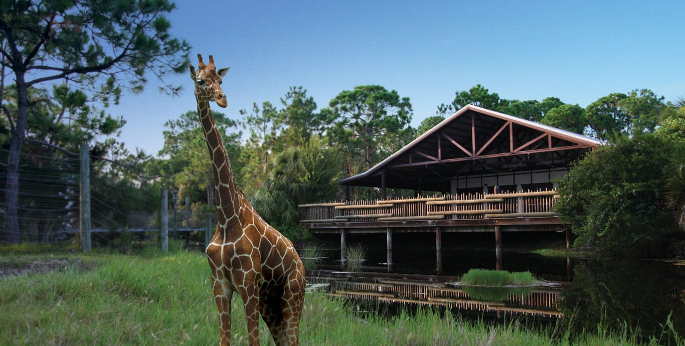Giraffe standing in front of Nyami Nyami River Lodge