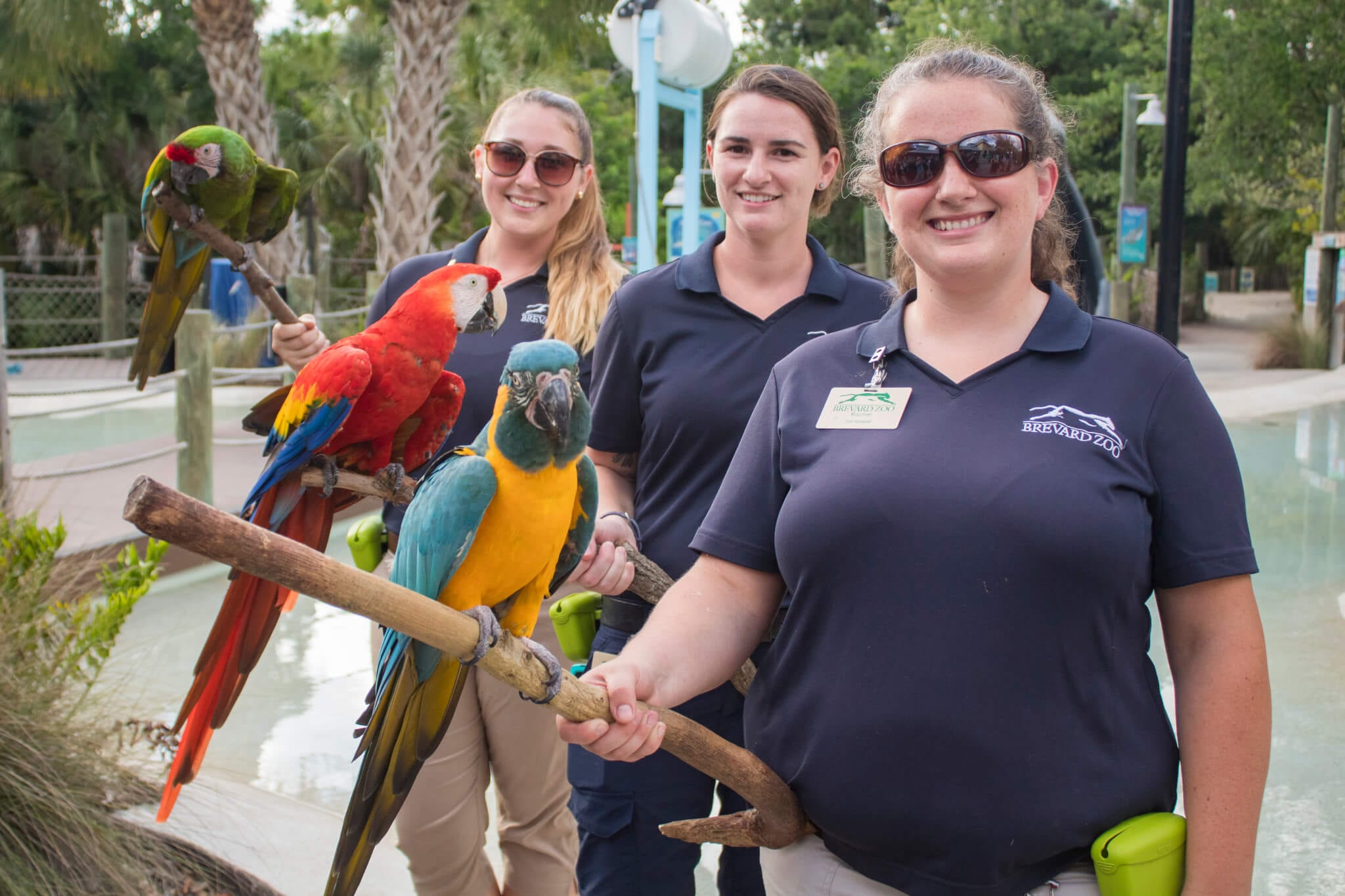 Keepers holding macaws
