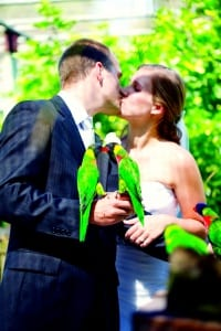 Bride and groom kissing with lorikeets on their hands