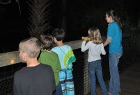 Kids looking for animal during night hike