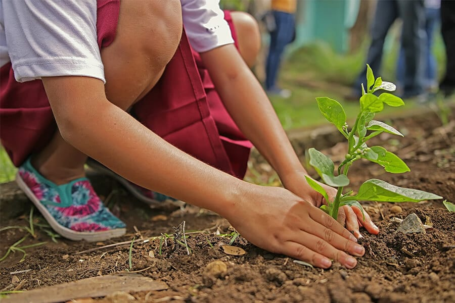 Young person planting a tree