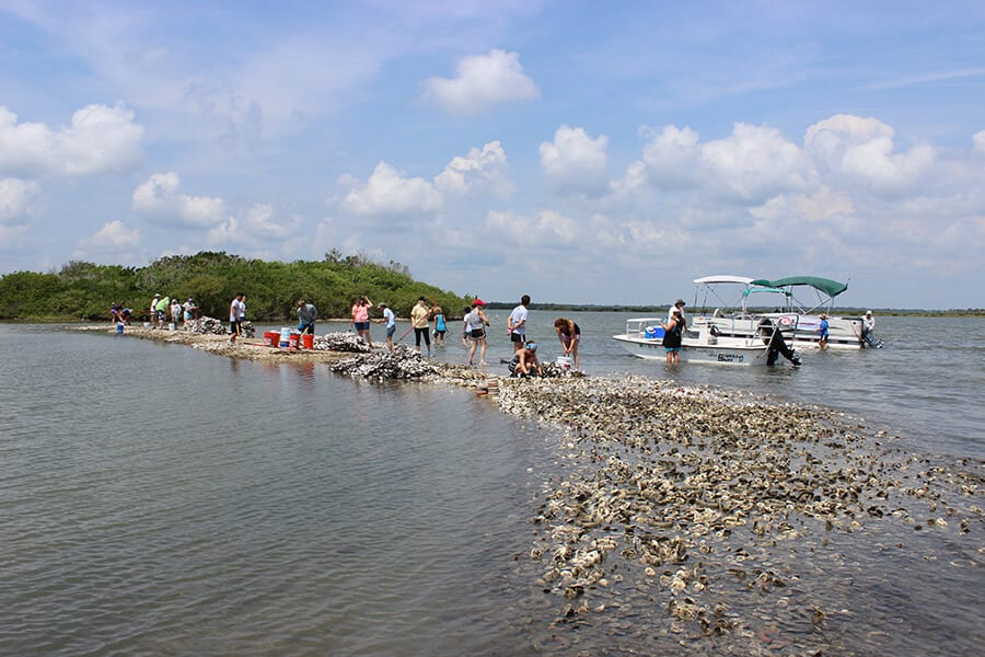 Restore Our Shores team building an oyster reef in the lagoon