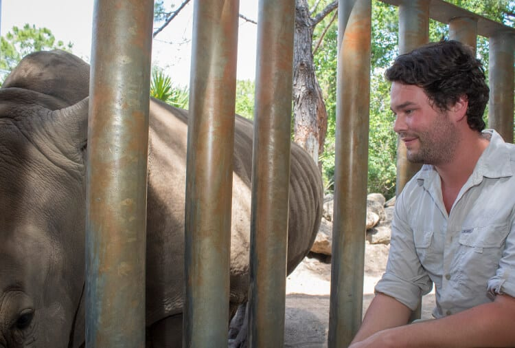 Guest getting face to face with white rhino