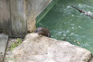 riverotter4