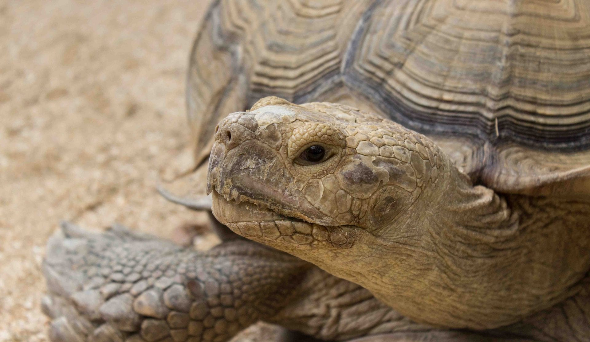 Close up of tortoise