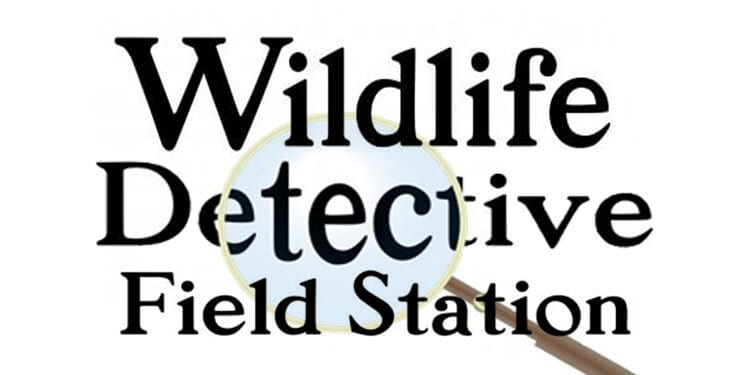 wildlife detective field station