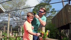 Son and father feeding lorikeets