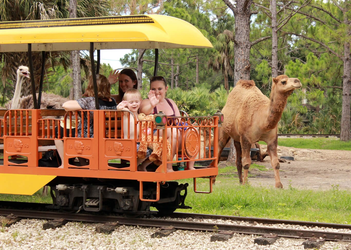 how to get to melbourne zoo by train